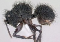马达加斯加的418种怪异蚂蚁